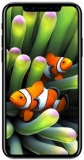Фото Apple iPhone 8